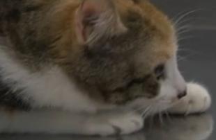 Campanya d'esterilització d'animals a preu reduït