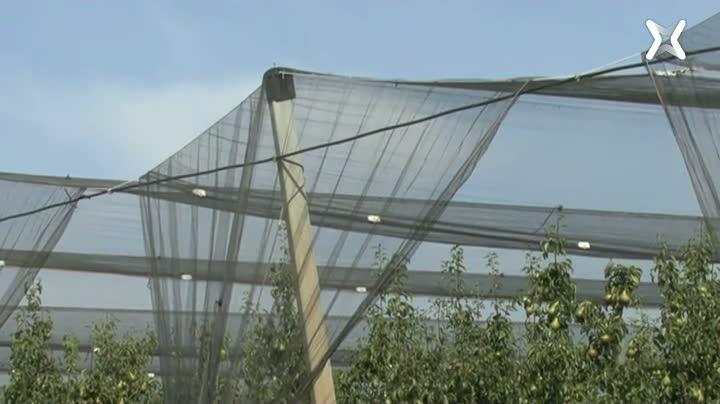 La protecció dels cultius contra les pedregades