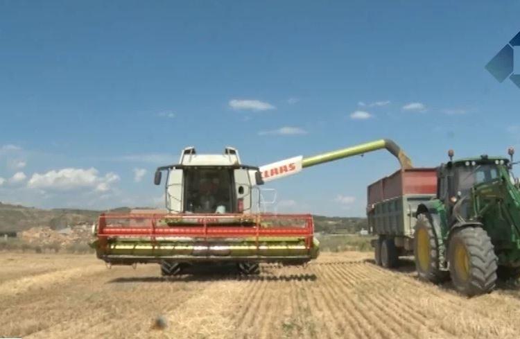 La collita de cereal podria caure un 50% en alguns conreus de la Noguera