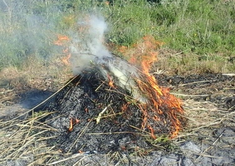 El 15 de març comença la prohibició de fer foc al bosc