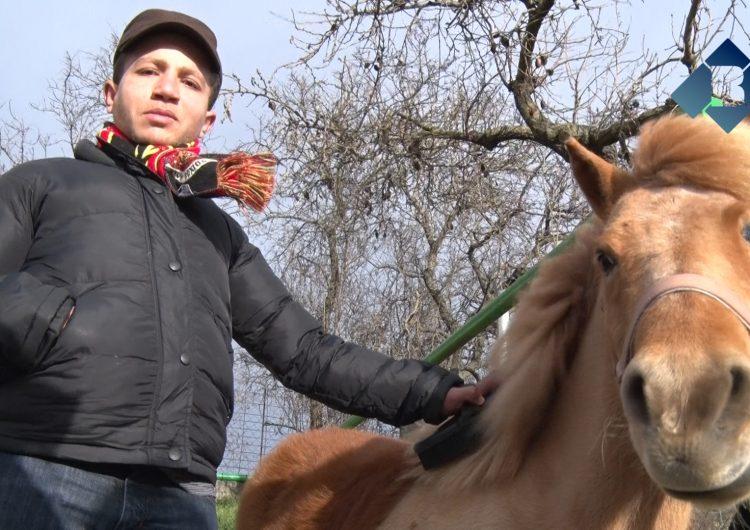 Els alumnes de l'Estel aprenen les rutines diàries dels cavalls i ponis
