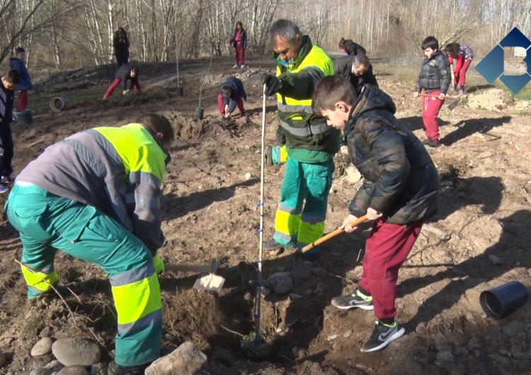 """Prop de 250 escolars balaguerins participen a """"La plantada de l'arbre a les Franqueses"""""""