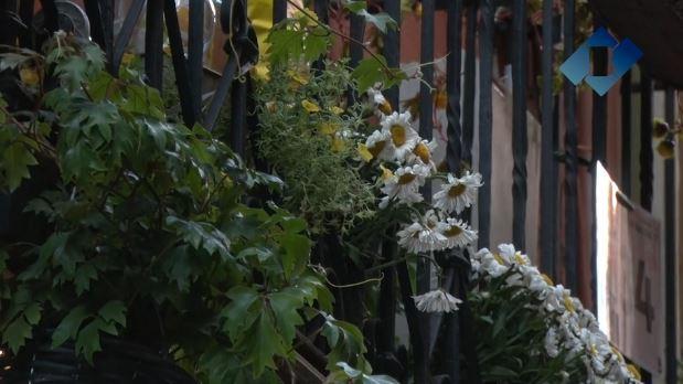 Aquest divendres finalitza el primer concurs de 'Flors als balcons' al centre històric de Balaguer en el marc del projecte Viles Florides