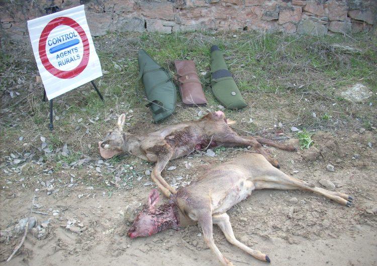 Els Agents Rurals decomissen dos cabirols caçats furtivament a Os de Balaguer