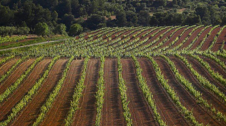 Castell del Remei s'introdueix a l'estat de Washington i comercialitza en mig any 6.000 ampolles de vi