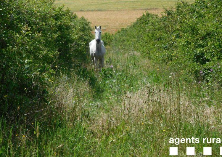 Els Agents Rurals expedienten dos veïns d'Algerri per tenir cavalls en mal estat