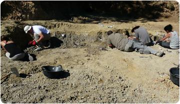 Troben 20 restes de dinosaure al jaciment cretàcic de l'Espinau a la Noguera