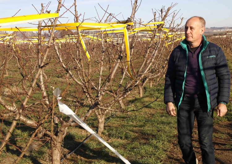 Agricultura rep 600 peticions de pagesos interessats en el Pla d'arrencada d'arbres de fruita de pinyol