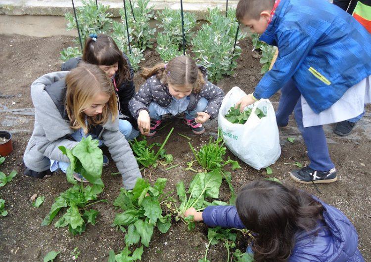 L'Escola Gaspar de Portolà desenvolupa un Projecte Educatiu per la Sostenibilitat