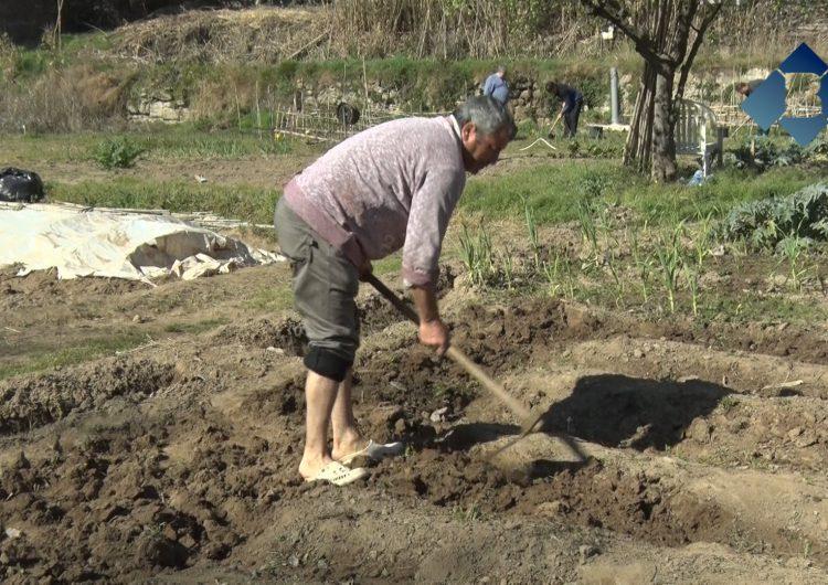Una desena de famílies participen a la 9a temporada del porjecte 'Cultiva't Horts Comunitaris'