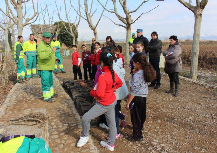 Els alumnes de primària dels centres educatius de Balaguer, fan la tradicional plantada d'arbres a la zona del Monestir de les Franqueses