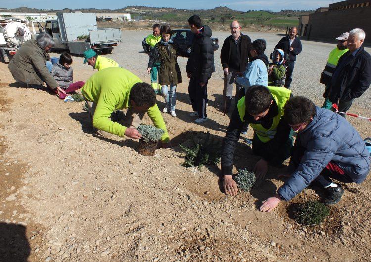 Els escolars de Balaguer poblen amb flora autòctona els voltants del cementiri