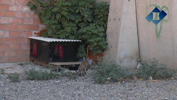 L'Associació PROGAT Balaguer necessita col·laboració per fer front a una situació insostenible