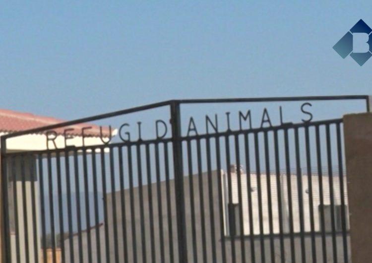 L'Ajuntament de Balaguer obté la llicència urbanística del refugi d'animals