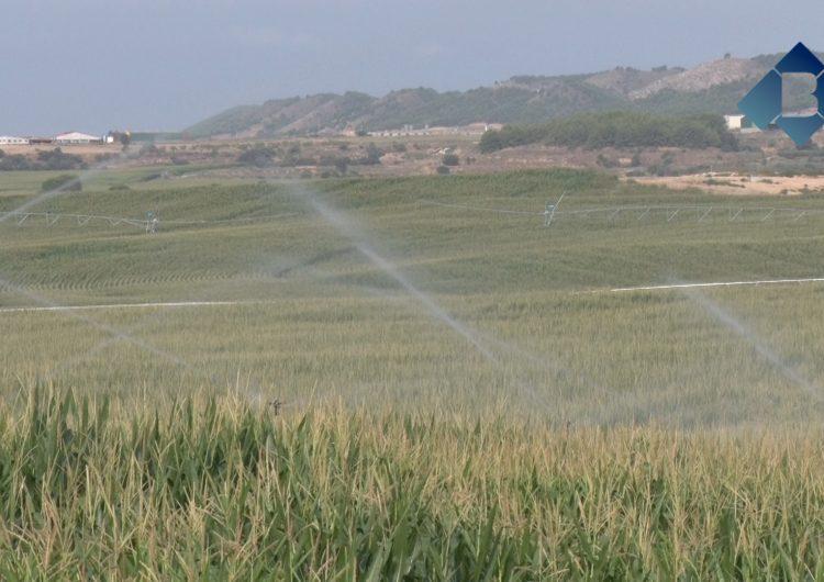 L'arribada de l'aigua de l'Algerri-Balaguer comença a donar els seus fruits