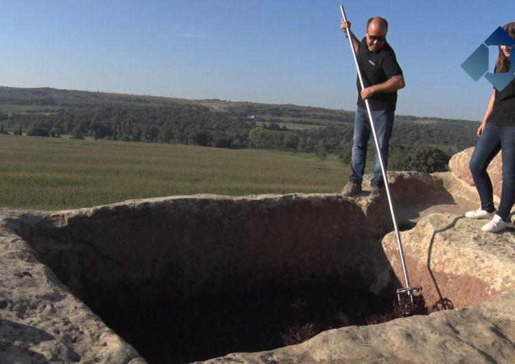 """Costers del Sió inicia la vinificació del vi de trull """"Finca Sios"""" als cups de pedra del segle XI"""