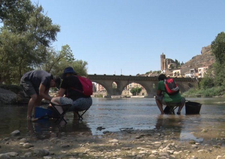 Comencen els tallers 'A l'estiu, l'or el busquem al riu' del Centre d'Intepretació de l'Or del Segre