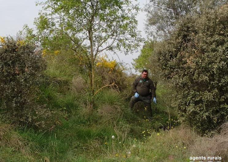 Troben un gos mort amagat en una zona forestal de Balaguer i denuncien el seu propietari