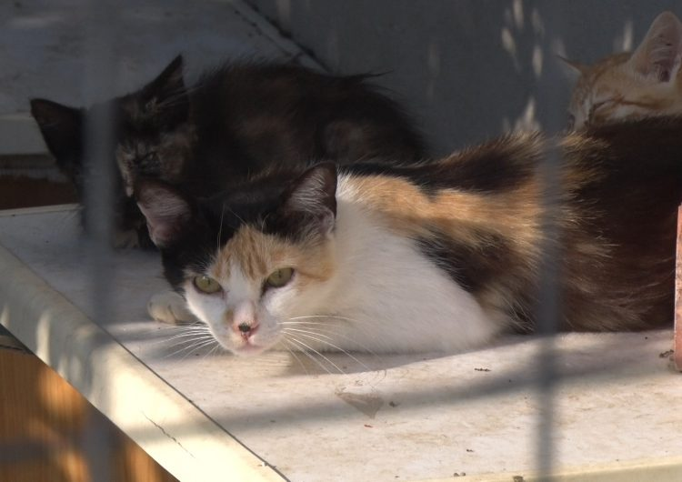 L'Ajuntament de Balaguer treballa en una nova ordenança sobre animals que inclourà un carnet per alimentadors de gats de carrer