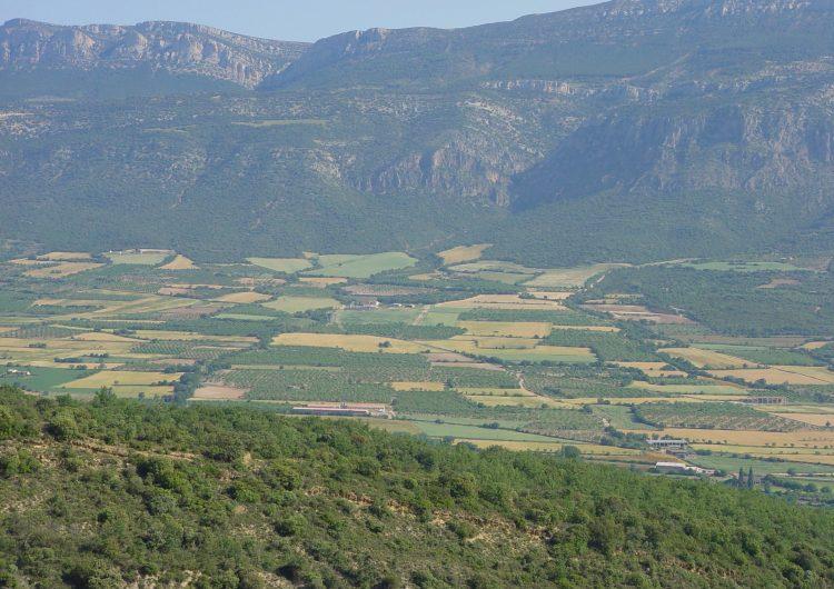 Els paisatges agrícoles amb parcel·les petites i variades fomenten la biodiversitat