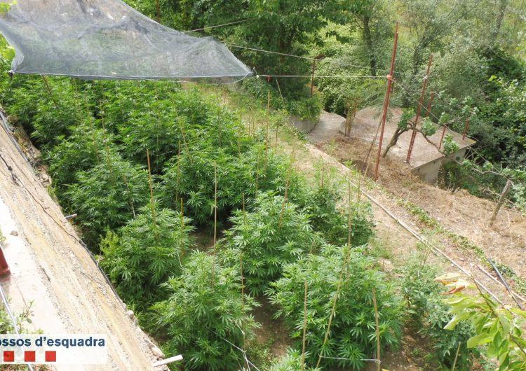 Els Mossos detenen dues persones acusades de cultivar marihuana en dos habitatges de la Noguera