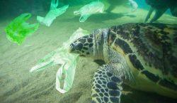 Com reduir l'ús del plàstic en el teu dia a…