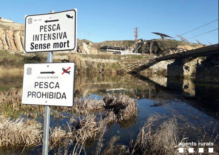 Denuncien tres persones per pescar en aigües prohibides a Ivars de Noguera