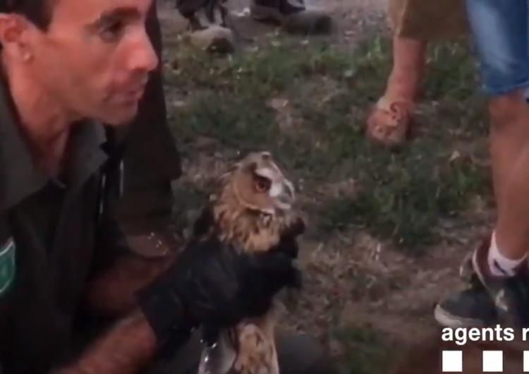 Els Agents Rurals alliberen ocells nocturns protegits a la Noguera