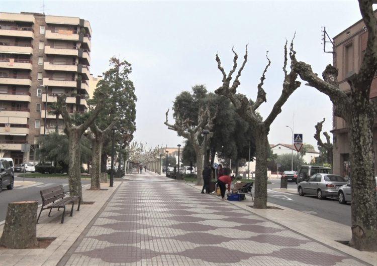 La Paeria de Balaguer saneja els arbres plataners que presentaven diverses patologies