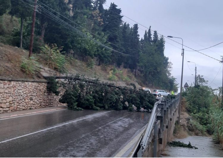 Tall a la carretera C-12 per la caiguda d'un arbre