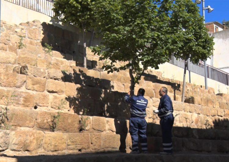 La Paeria de Balaguer contractarà 50 persones gràcies a diversos plans d'ocupació