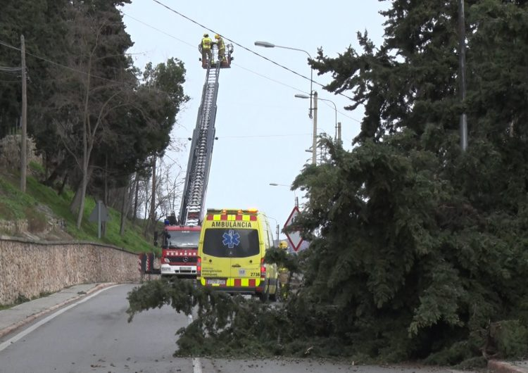 El temporal Gloria causa diverses incidències a Balaguer