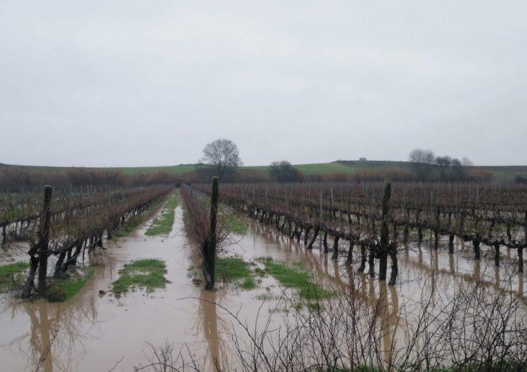 El temporal afecta diversos camps de conreu, vinyes i fruiters a Menàrguens