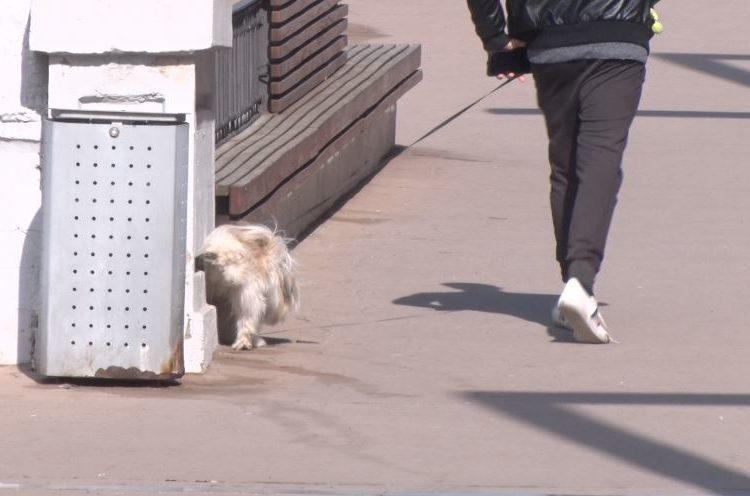 Balaguer preveu obligar a netejar la orina dels animals domèstics a la via pública