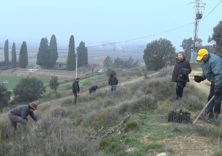 Reforestació a Montgai a través del projecte de Boira Experience
