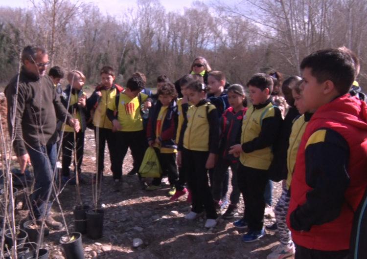 Els escolars de Balaguer fan la plantada de l'arbre a Les Franqueses