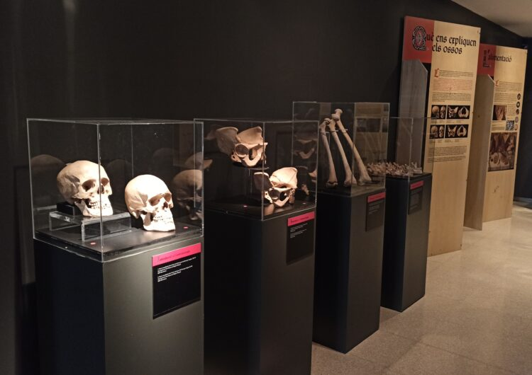"""El Museu de la Noguera obre al públic l'exposició """"Ossos: un viatge a l'època medieval de la mà de l'antropologia física"""""""