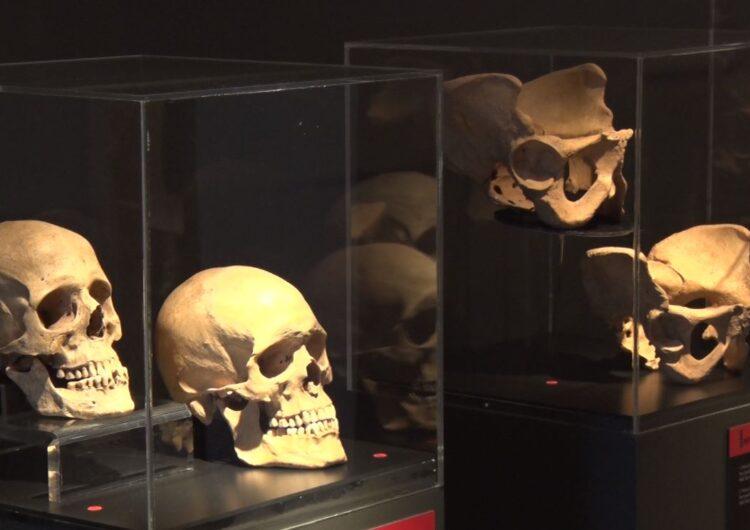 """""""Ossos: un viatge a l'època medieval de la mà de l'antropologia física, al Museu de la Noguera"""