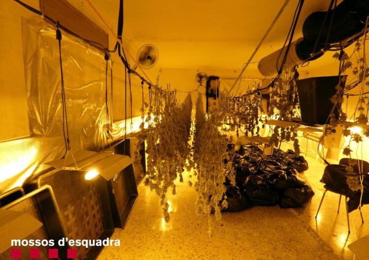 Els mossos detenen un home a Térmens per cultivar 300 plantes de marihuana