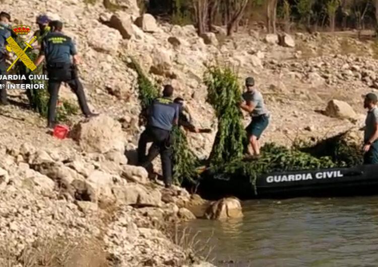 A presó els cinc detinguts per cultivar més de 3.000 plantes de marihuana al costat del pantà de Camarasa