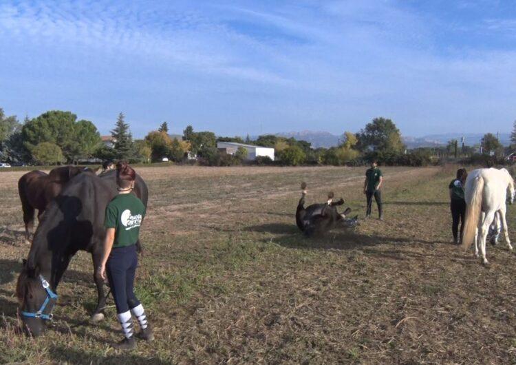 L'Escola Agrària de Vallfogona de Balaguer incorpora instal·lacions per a cavalls
