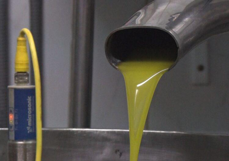 Bona previsió de la campanya d'oli als molins de la Noguera
