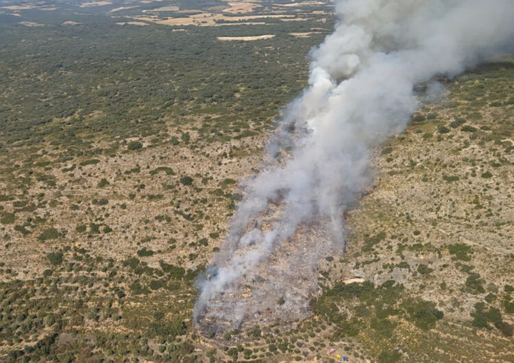 Els Bombers treballen en un incendi de vegetació al terme municipal de les Avellanes i Santa Linya