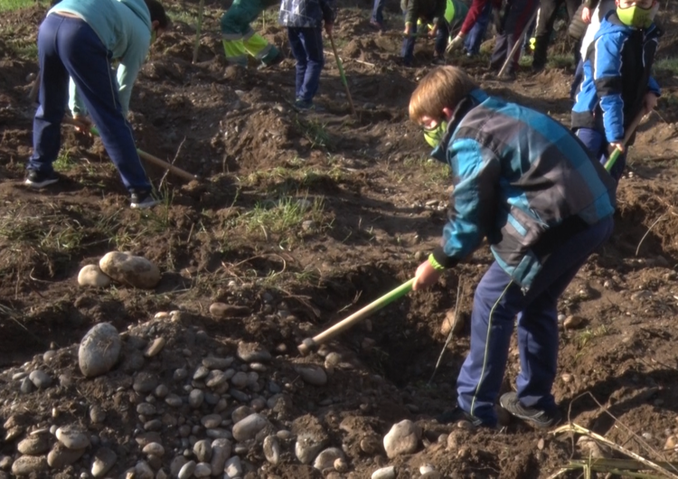 Les escoles balaguerines realitzen la tradicional plantada d'arbres al Parc de les Franqueses