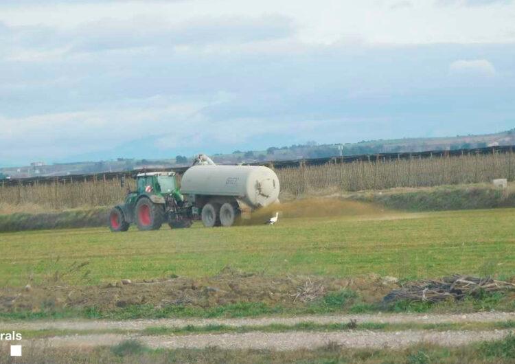 Els Agents Rurals denuncien a Penelles una empresa per incompliment de la normativa de dejeccions ramaderes