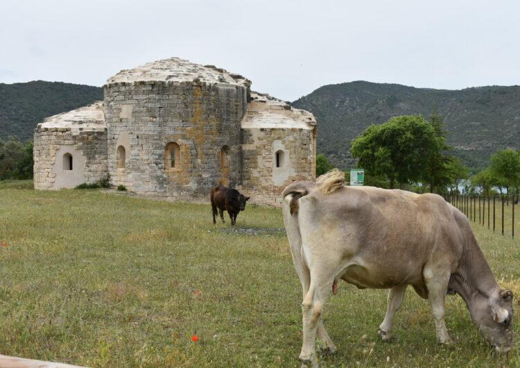 Una quinzena de vaques ocupen un monestir de la Noguera restaurat per la Generalitat i l'Ajuntament d'Os de Balaguer