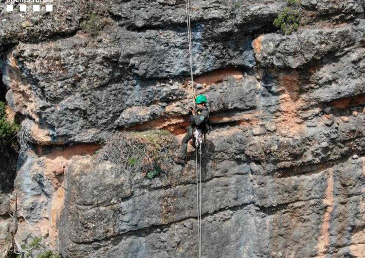 Els Agents Rurals desmantellen al Montsec una instal·lació d'slackline que passava per sobre d'un niu d'àliga cuabarrada