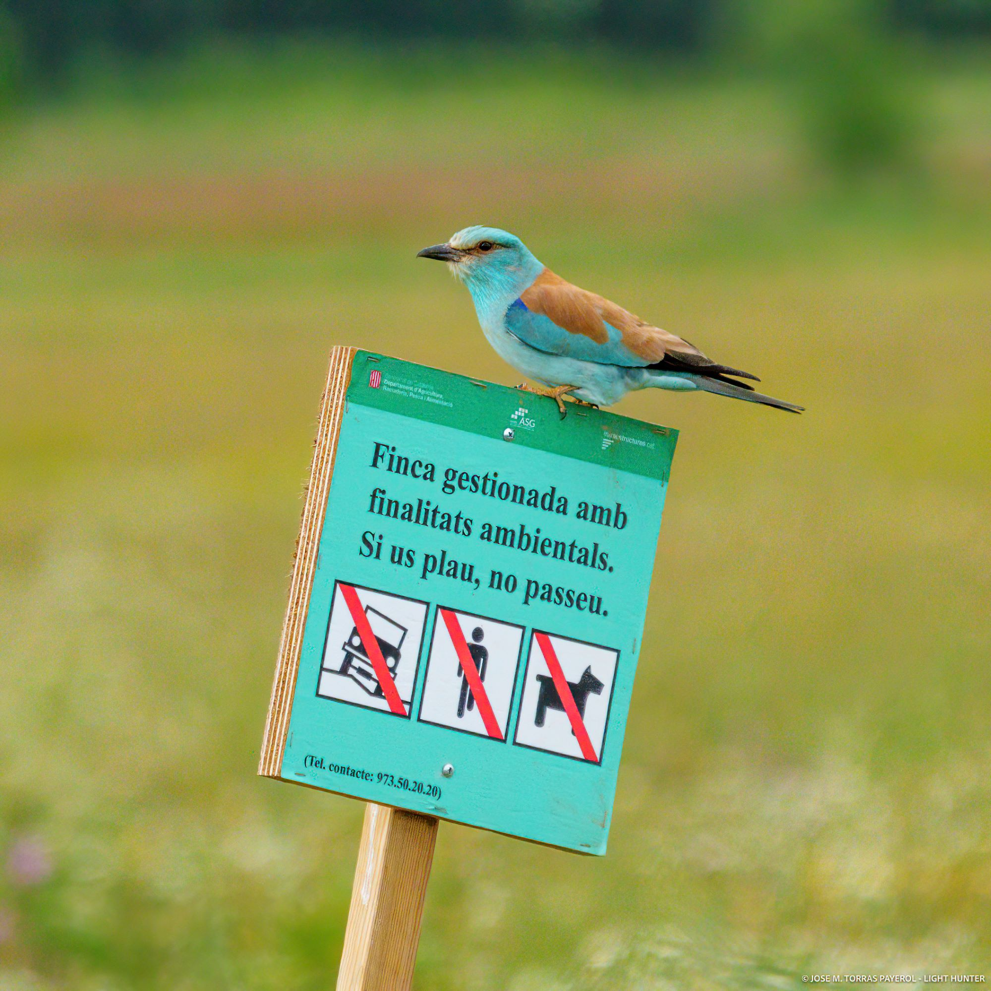 Optimisme per a les aus estepàries de la plana de Lleida